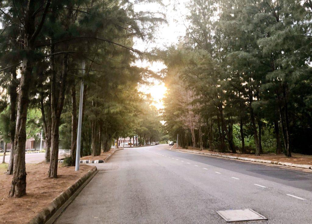 ジャラン・バイドゥリ1の並木道