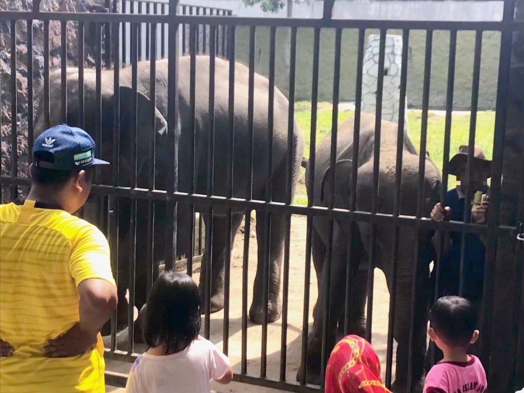 ジョホール動物園のゾウ