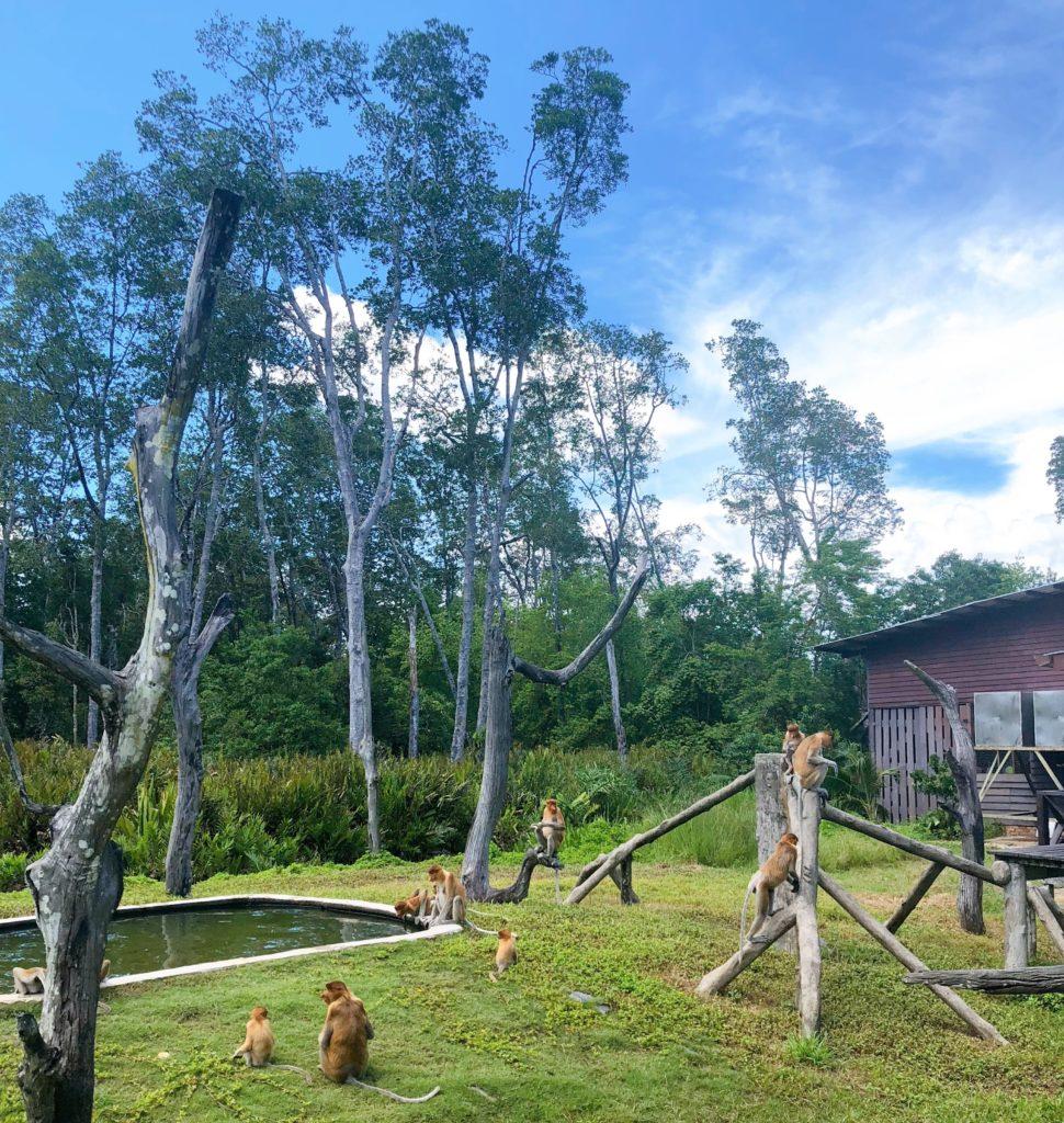 ラブックベイテングザル保護区のプラットフォームBの風景