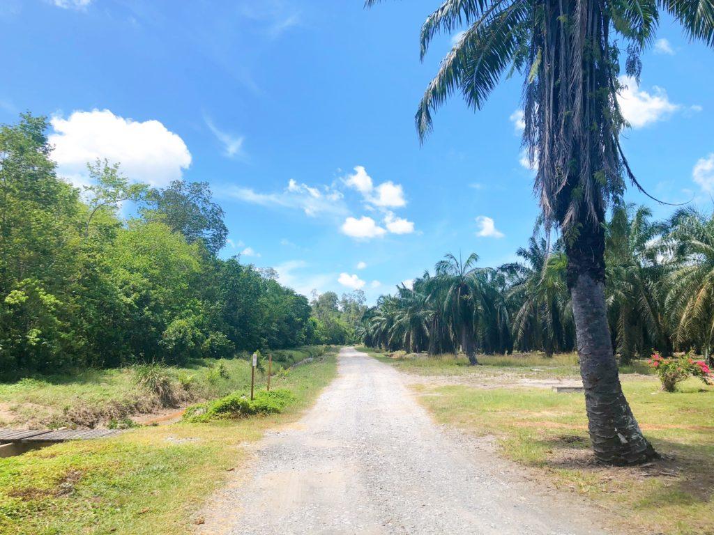 ラブックベイテングザル保護区の道