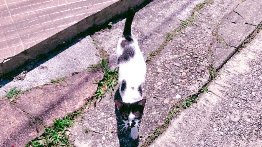 ドラマ「猫」のロケ地:特定できた撮影場所をご紹介